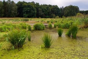 Green Swamp by alban-expressed