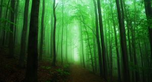 deep green by cithero