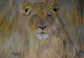 Lioness by HendrikHermans