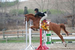 Show Jumping - 10 by Silver-Stock-Images