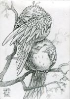 Sketchbook 047 (Birds) by black-griffel