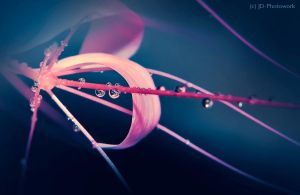 After the Rain by jd-photowork