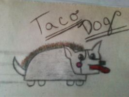 taco dog from nyan cat by EternalLoveAngle