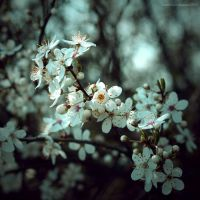 spring for you II by JoannaRzeznikowska