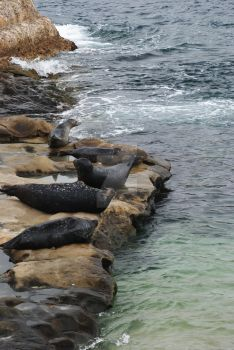 Seals Sun Bathing by musiclover25162