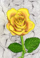 Yellow Rose by agataylor
