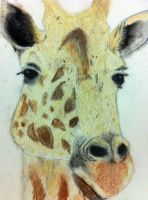 Giraffe! by Ritika-of-fire