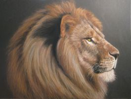 Lion portrait by Acaciacat
