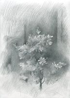 Young Oak-Tree. 2006 by Yudaev