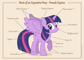 Parts of an Equestria Pony - Female Equine by dm29
