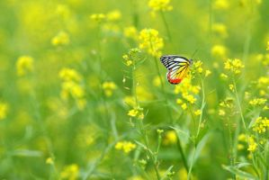 Butterfly with yellow flowers by shiyen119