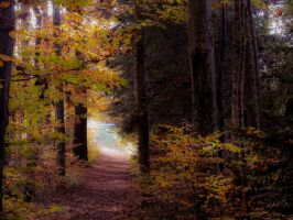 Indian Summer in my Forest by Escara40
