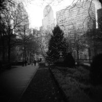 a city tree at christmas by cedmundmiller