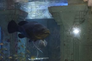 Grouper in The Dig, Atlantis by Writer4Him