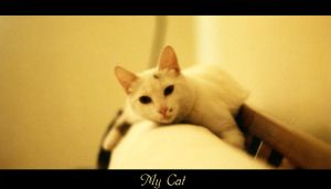 My cat again by cat-lovers