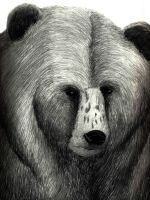 Bear Portrait by brandonolterman