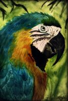 Blue Macaw by gilly15