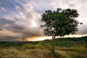 One Man One Tree by adityapudjo