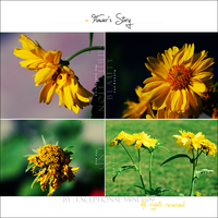 . . a Flower's Story . . by Exceptional-Mind