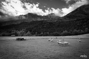 Moutons by rdalpes