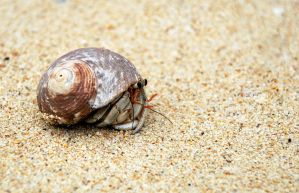 Hermit crab by emshh