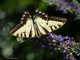 Buttefly yellow on green by Mogrianne
