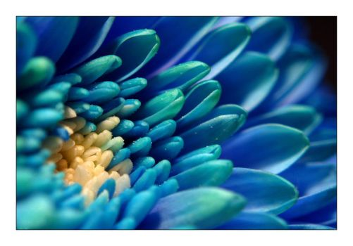 In blue by cesalv