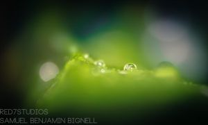 Waterdrops by Samuel-Benjamin