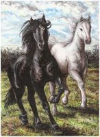 Brothers in Gallop by Kirsch-vanderWit