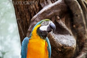 Parrot by Annso94