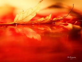 Red by PhotographsByBri