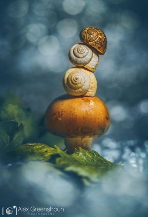 The Garden Gnome by alexgphoto