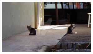 Antalya-Centre Stray Cats by SubArcticSheep
