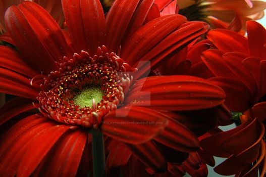 Red Floral by claytonbruster