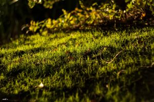Old Grass by Nick356