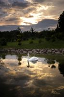 swan on the clouds by panosreiko