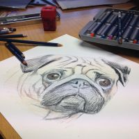 Pug teaser by AtomiccircuS