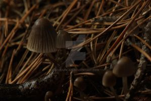 Slug and 'Shrooms by agbduncan