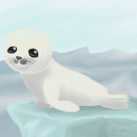 Baby Harp Seal by Typhloser