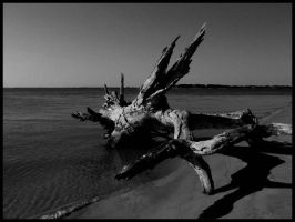 Driftwood Beach2 by sees2moons