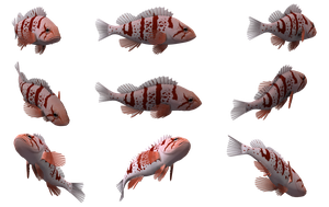 Fish Set 21 by Free-Stock-By-Wayne