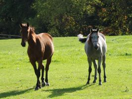 Yearlings2 by EquestrianPassion