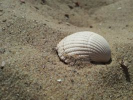 ~ Shell in the Sand ~ by JoJoAsakura