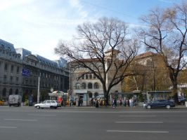 Famous trees in Bucharest city center by Rikitza