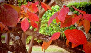 Autumn Leaves in my yard by Tailgun2009