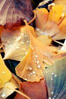 Raindrop Leaf by fucute