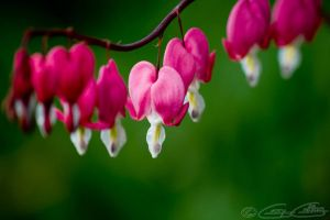 Heartly by GerryGollan