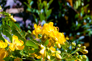 Yellow flowers by RxJoker