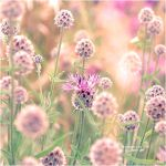 Pastel Colours by Holunder