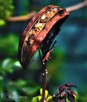 Seed pod by ryanwaff